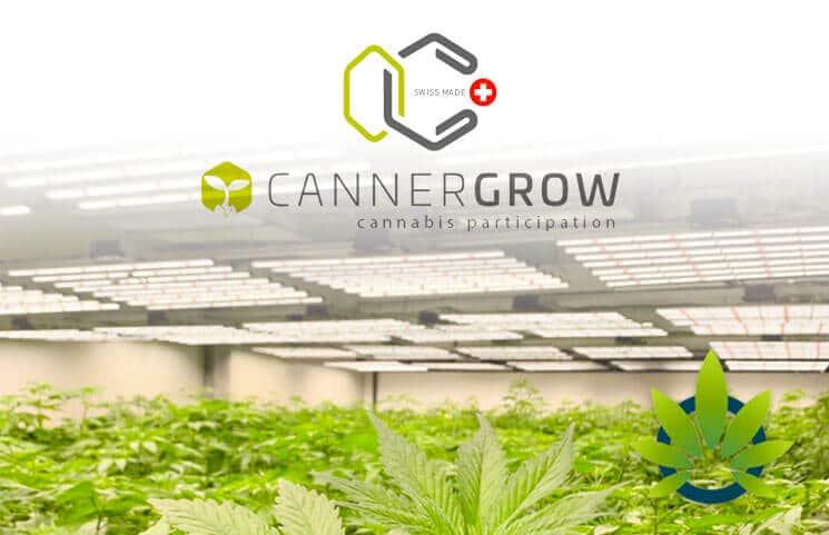 CANNERGROW – Mit Cannabis legal GELD verdienen