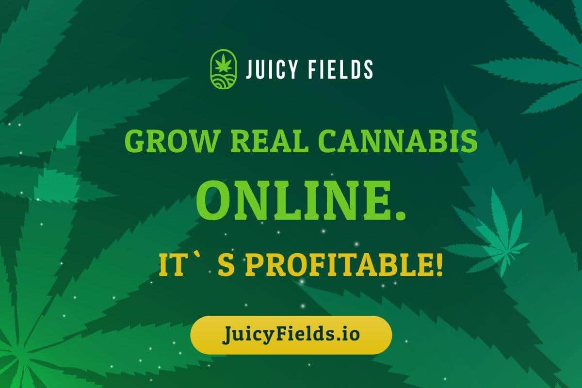 Juicy Fields Review 2021 | Bis zu 600% Rendite mit Cannabisanbau